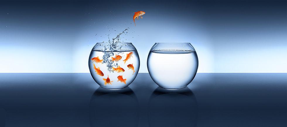 fish_water_for_wp Kopie.jpg