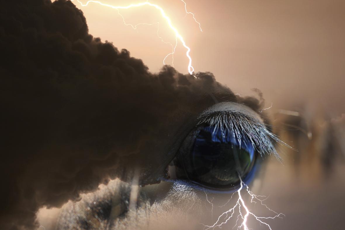 thunderhorses_1