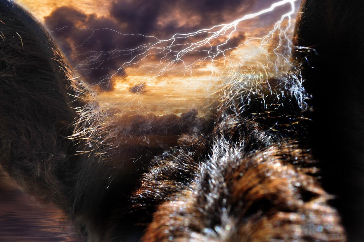 thunderhorses_2