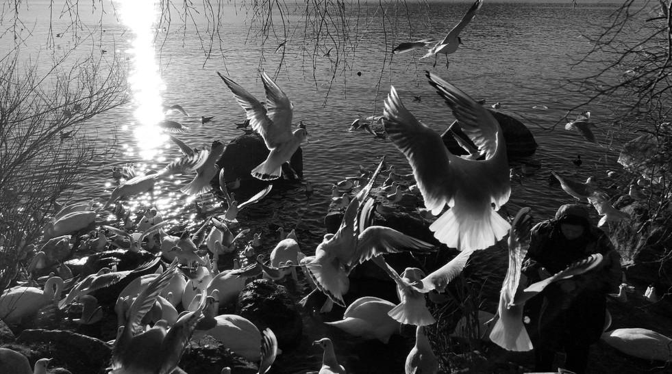 more gull by Leo Gesess Photographer Switzerland www.comcom.ooo