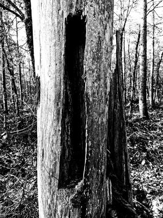 tree by Leo Gesess Photographer Switzerland www.huawei.com www.comcom.ooo