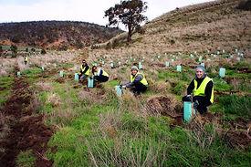 VIC-2013-Planting-Trees-at-The-Island-7-