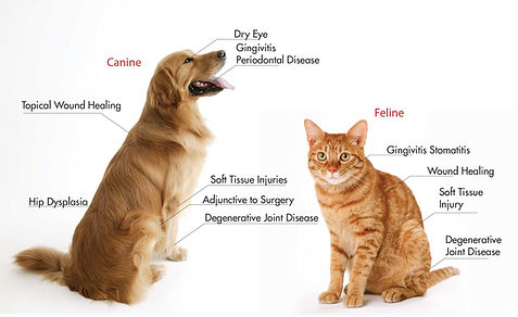 PRP-Dog-and-Cat.jpg