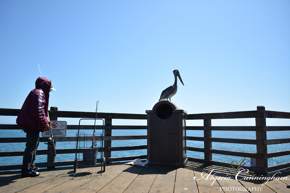Photo of a fisherman and pelican on the pier in Oceanside, CA.