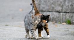 feral-cats-1280x692-c-default