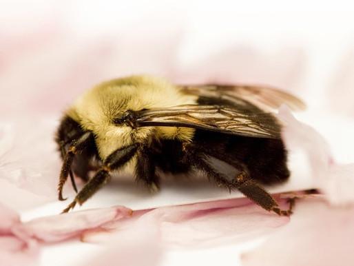 My Bee Experience