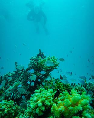 French-Polynesia-2019-1147.jpg