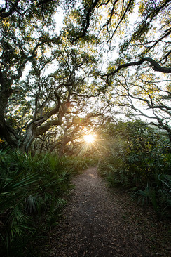 Cumberland-Island-Camping-2019-555.jpg