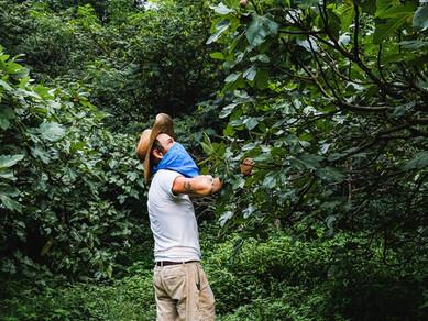 Picking Figs with Farmer Joe
