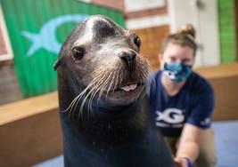 Sea Lion Georgia Aquarium