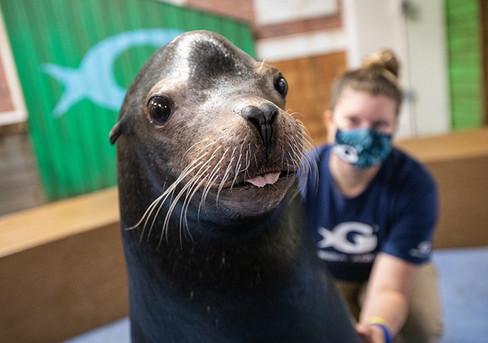 Diego at the Georgia Aquarium