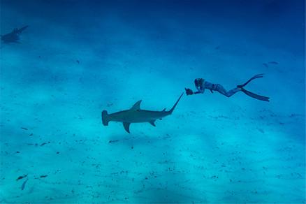 great-hammerhead-shark-02.jpg