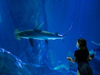 Predators of the Deep at Georgia Aquarium