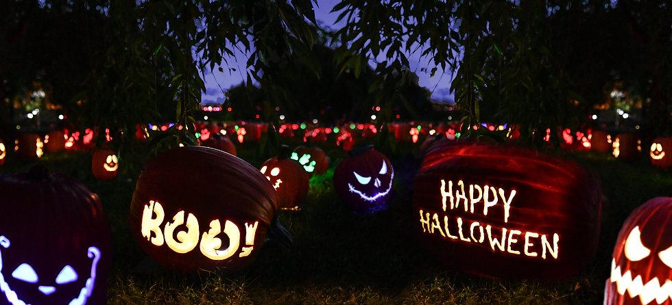 •• Boo! Happy Pumpkin Field.jpg