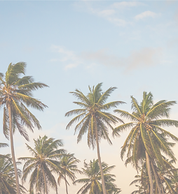 Palm%20Trees_edited.png