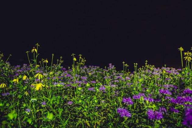 Wildflowers Still Life