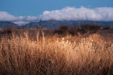 Desert Brush Still Life