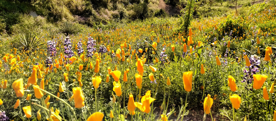 Wildflower Blooms & You: How-To Not Ruin It For Everyone