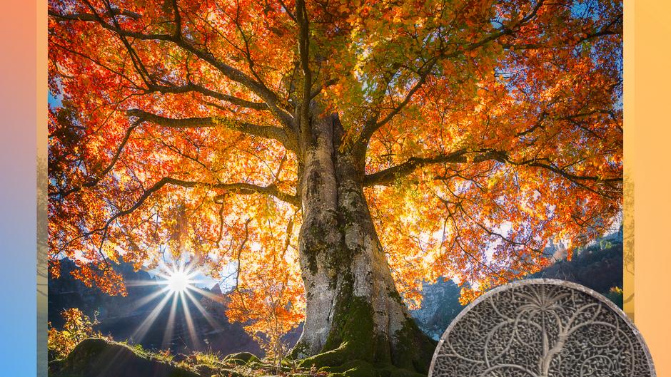 Dein Baum des Lebens: Reflektiere und wachse grenzenlos