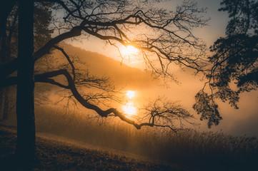 Máchovo Jezero v mlze za svítání