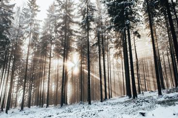 Příroda v mlze