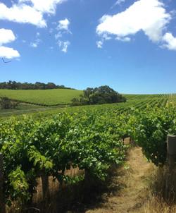 Willunga Hill Vineyard