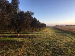 Australian Olive Company