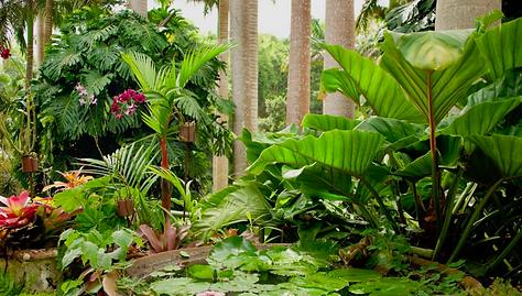 Hunte's Botanical Gardens Barbads