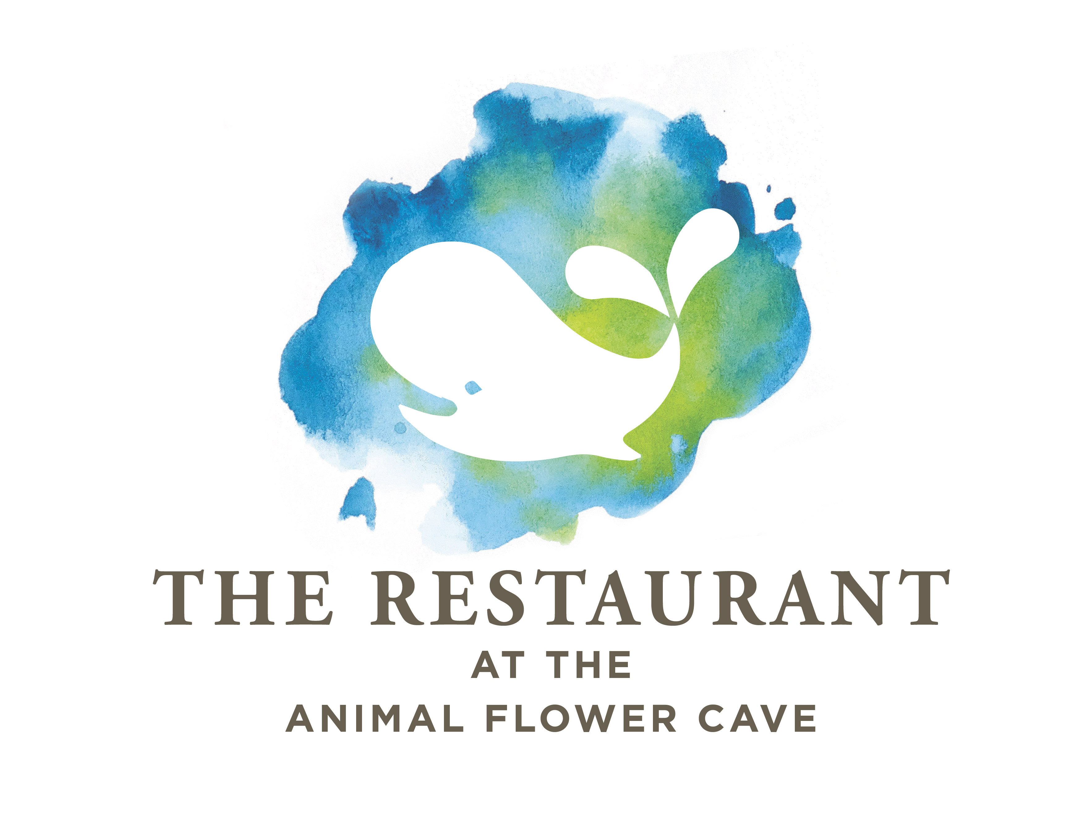 The Animal Flower Cave
