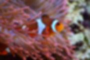 aquarium croisic sejours handicap.jpg
