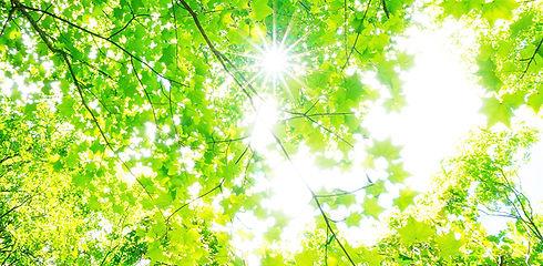 hikari_photo.jpg