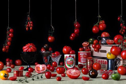 Still Life Tomatoes, 2015