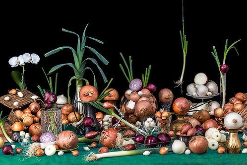 Still Life Onions, 2016