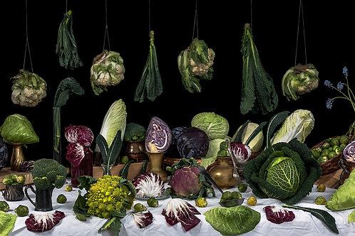 Still Life Cabbages, 2016
