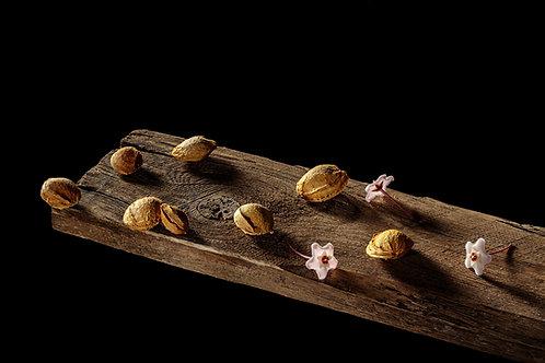Still Life with Apricot Stones and Hoya Carnosa, 2020