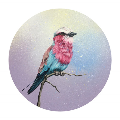 Amethyst - Lilac Breasted Roller