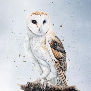 Owl web_edited.jpg