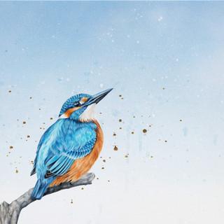 Kingfisher web.jpg