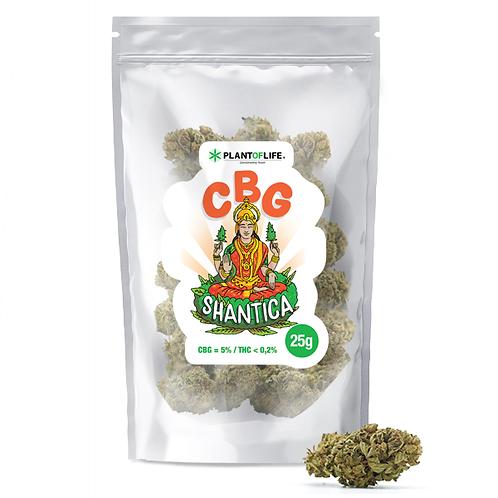 CBG Shantica 5% 25 Grams