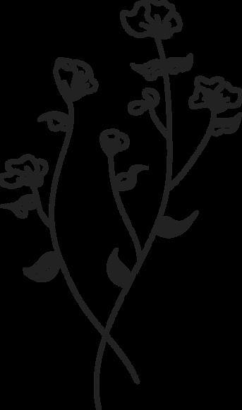 botanical-6.png