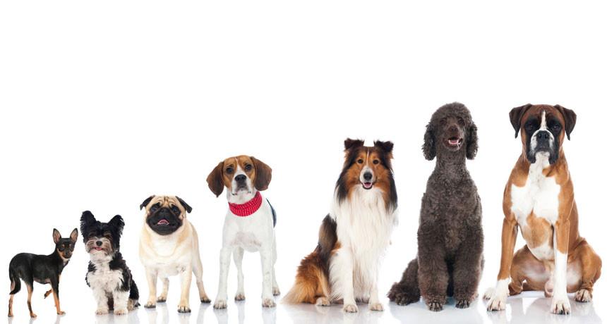 860-header-dog-breeds.jpg