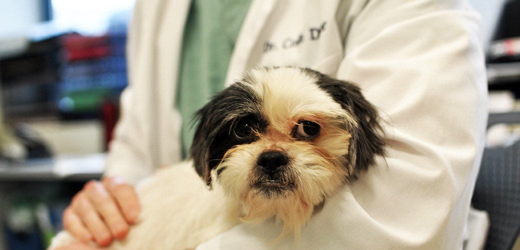 dog-care_common-dog-diseases_main-image.