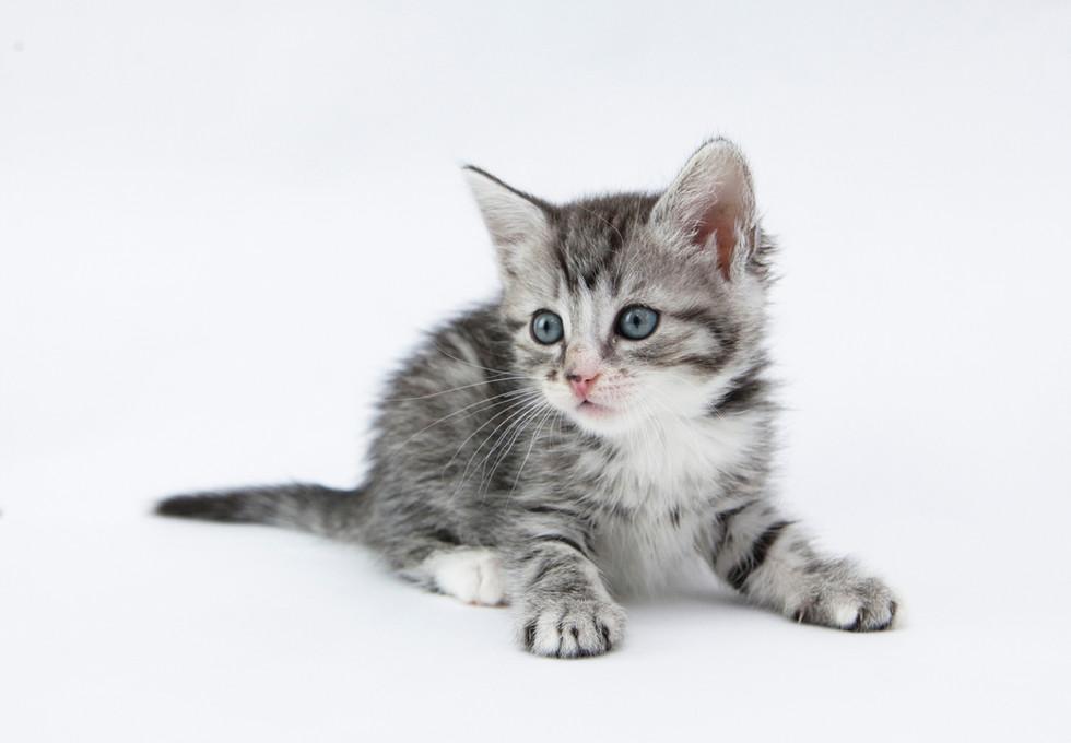 kitten-report.jpg