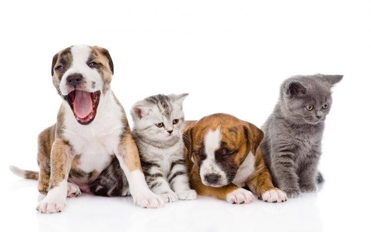 97005-white_background-animals-dog-cat-b