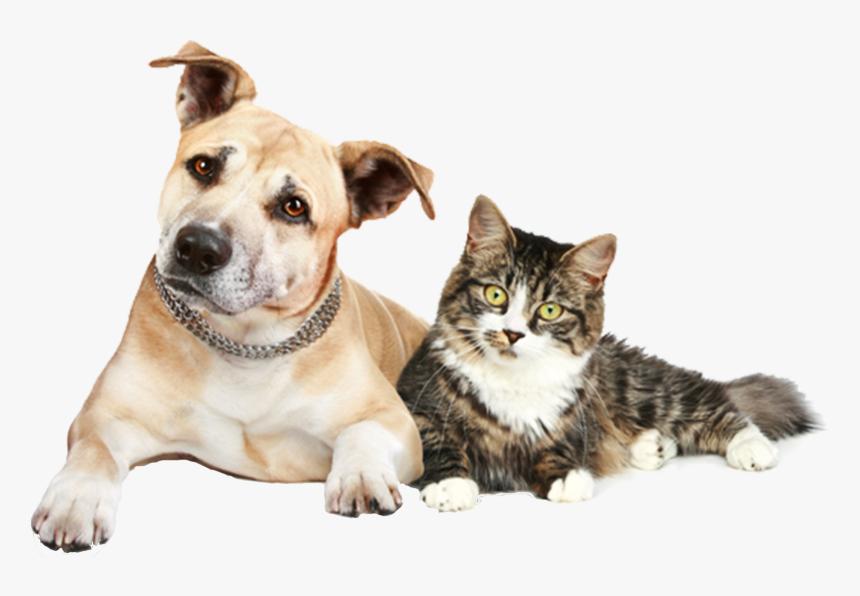214-2140447_transparent-dog-and-cat-png-