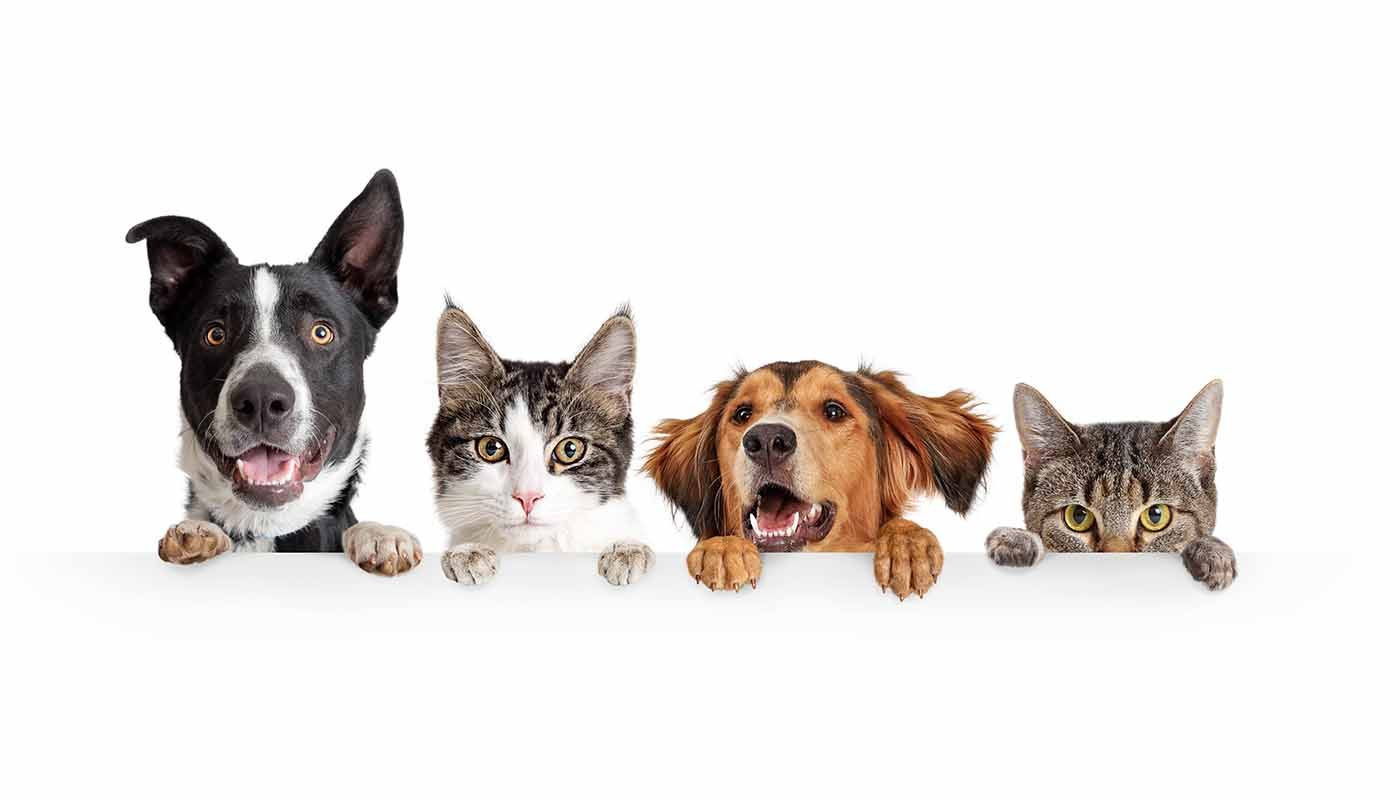 dogs-cats-1400x800.jpg