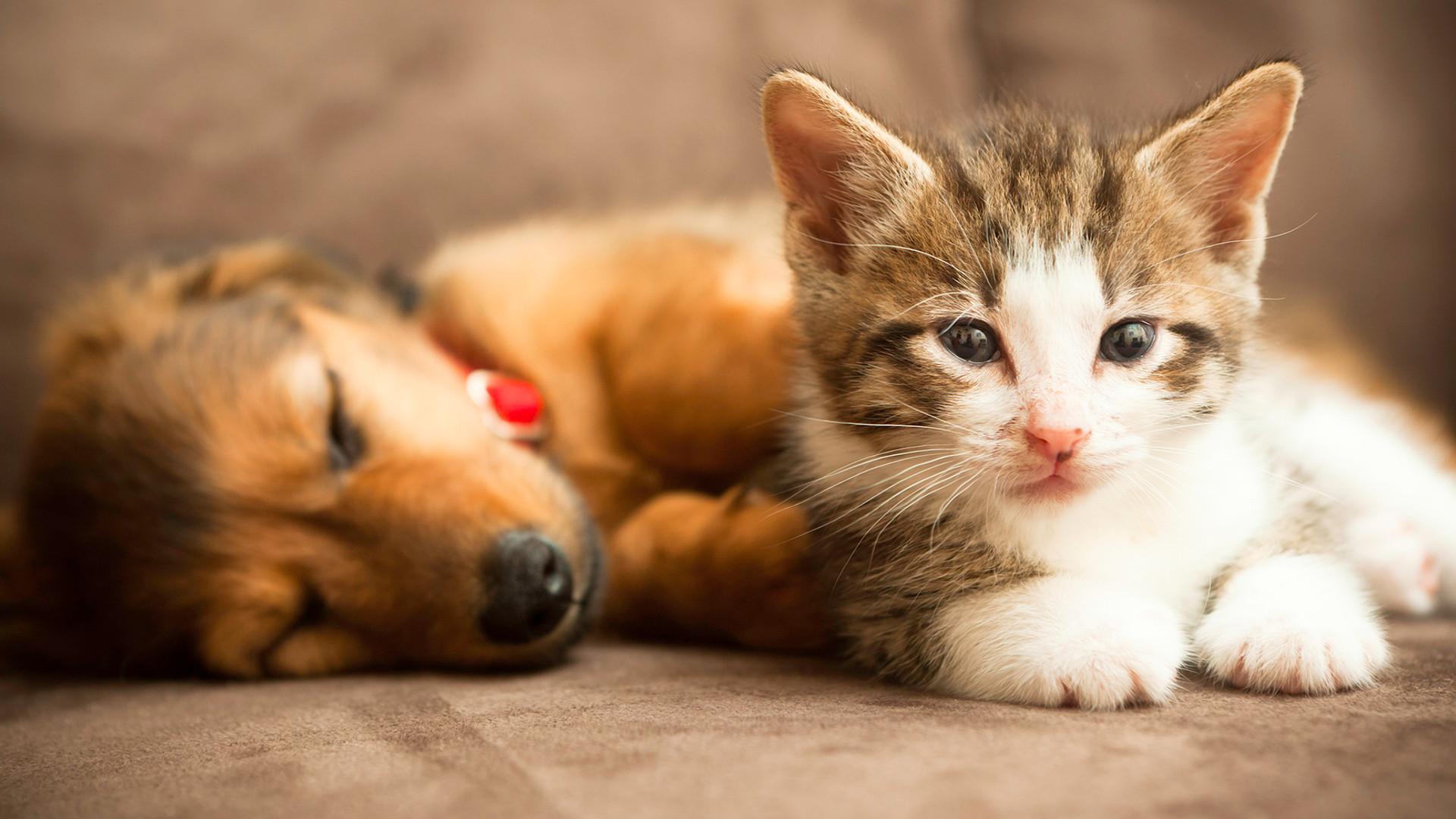 stock-dog-cat-today-181230-main-01_97f0d