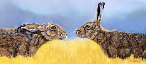 Border Hares 2020 Limited Edition Print