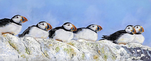 """Farne Puffins"" Limited Edition Print"