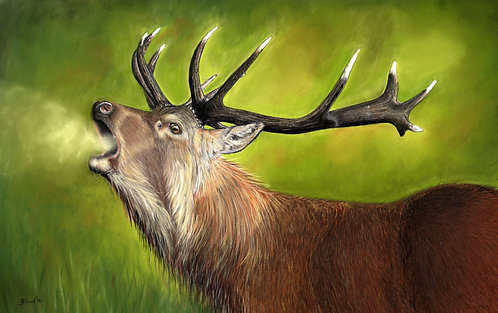 Red Deer Stag Limited Edition Print